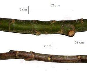 چوب قفس کاسکو و انواع طوطی