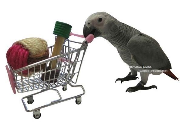 اسباب بازی جدید برای طوطی