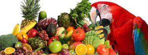 راهنمای تغذیه طوطی سانان