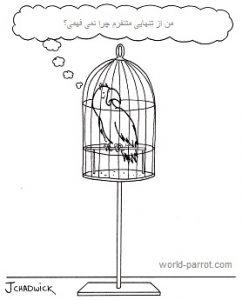 رفتارشناسی طوطی سانان