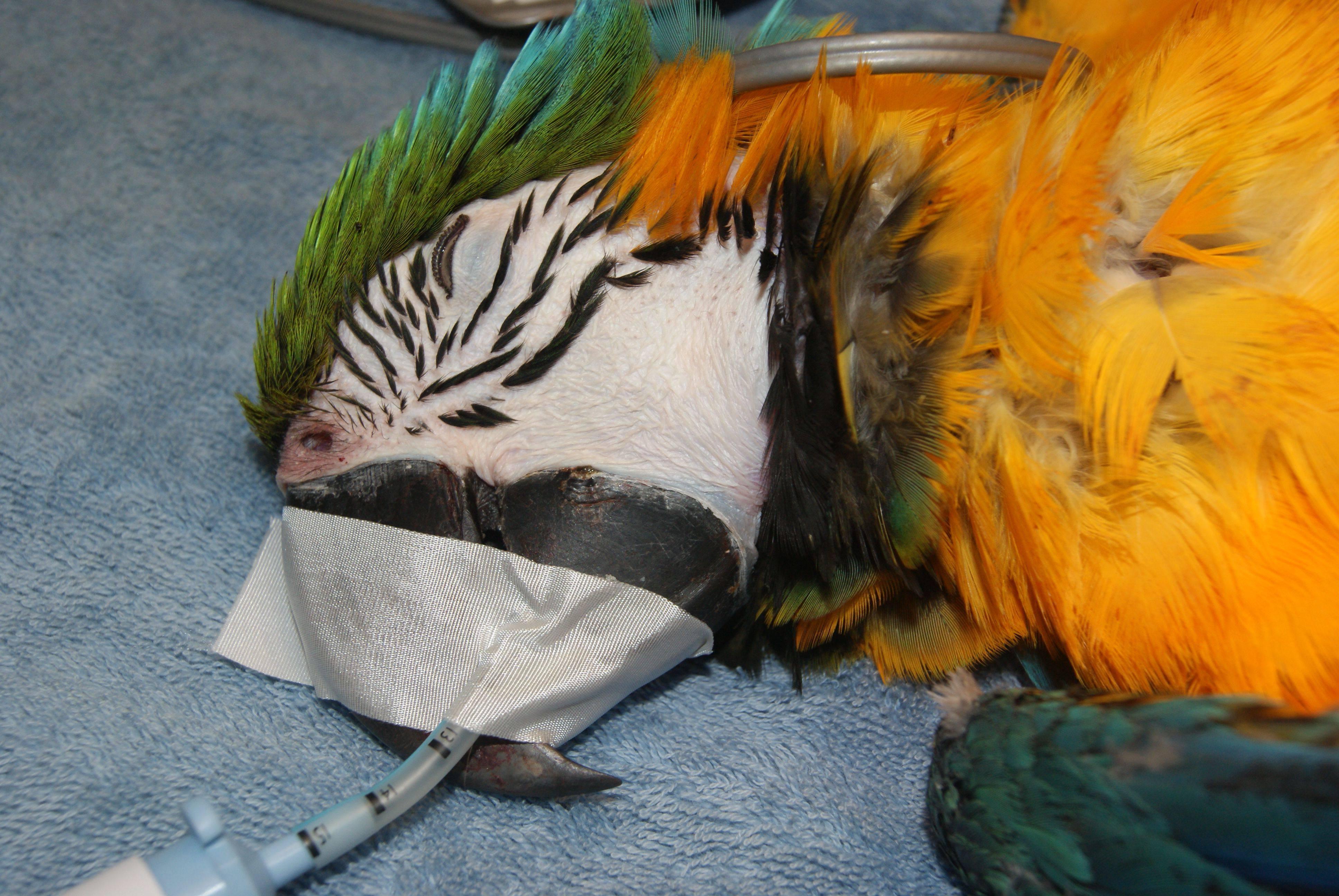 مراقبت خانگی کوتاه مدت از پرندگان بیمار یا مجروح