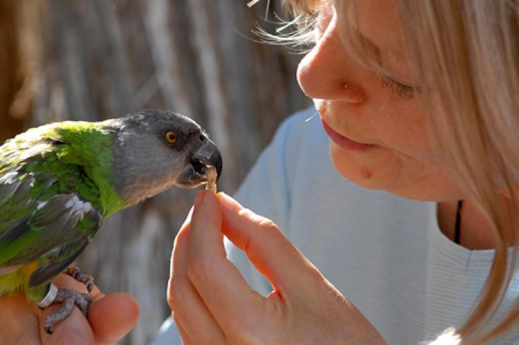اندوه جدایی از حیوان خانگی موردعلاقه