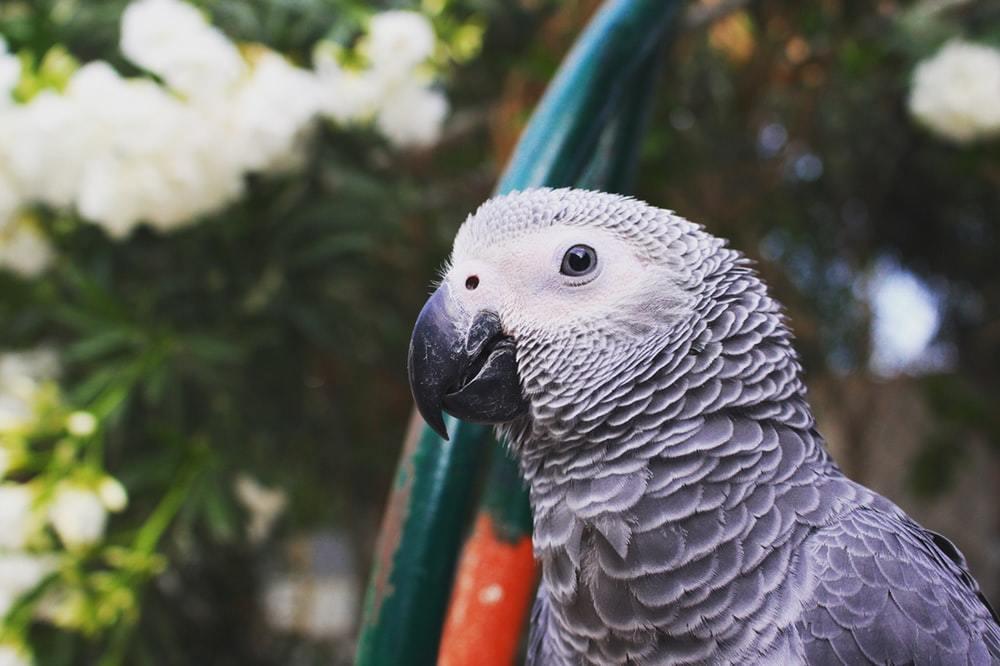 آسم و تنگی نفس پرنده
