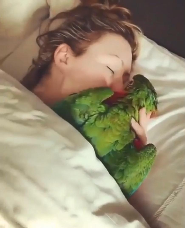 بوسیدن طوطی