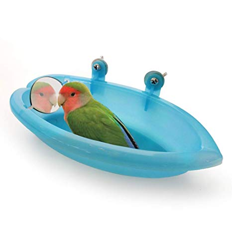 شستشوی پرنده طوطی حمام