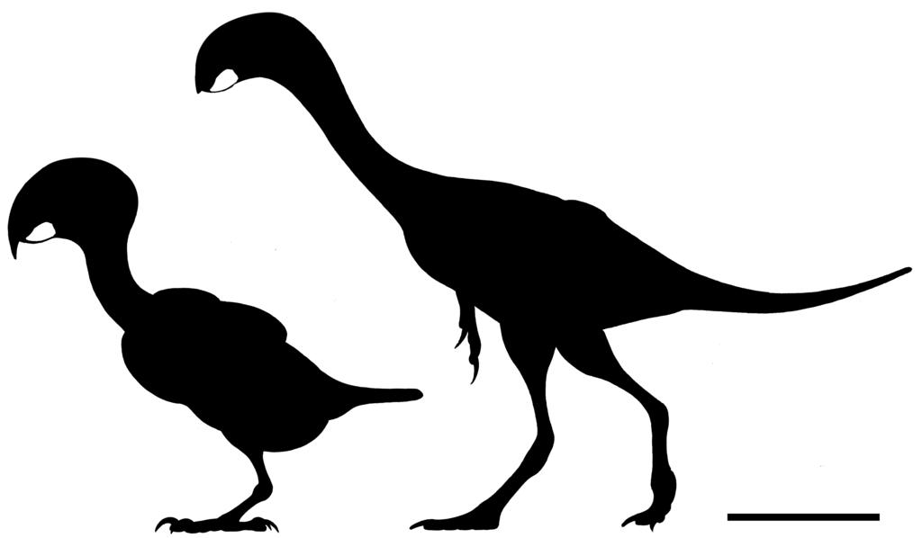 تکامل پرندگان طوطی