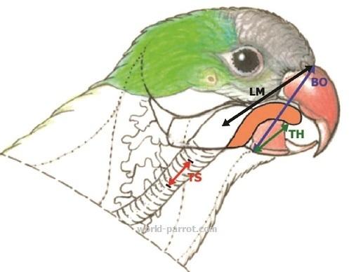 حس بویایی طوطی