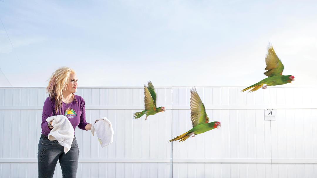 پرواز طوطی