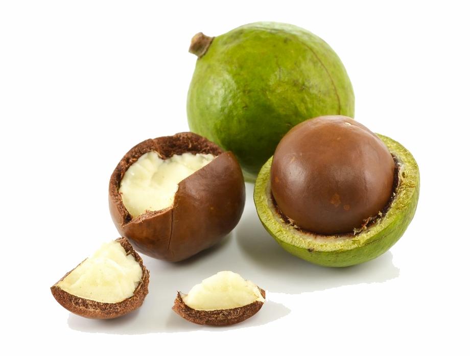 macadamia ماکادمیا