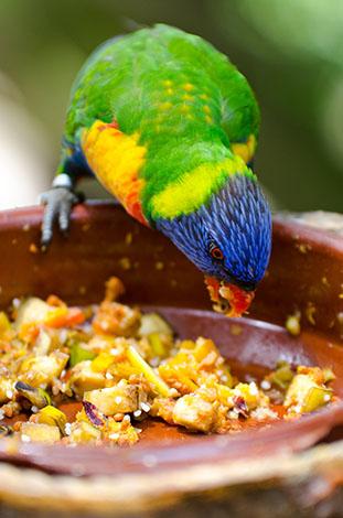 ویتامین های ضروری و مورد نیاز طوطی ها