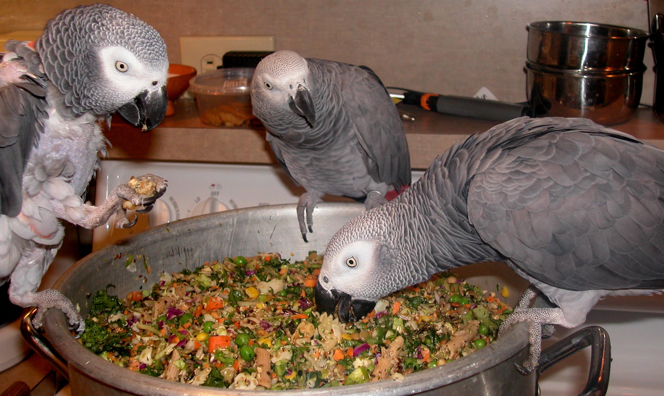 مضرات تخمه خوردن طوطی عادت غذایی ترک آموزش تغییر
