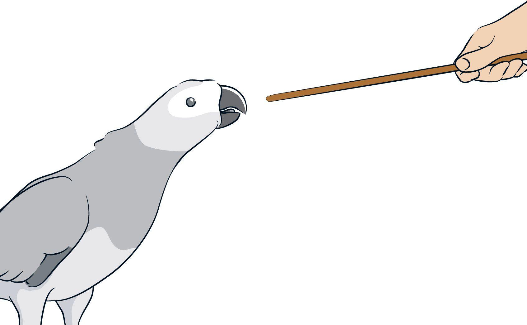 آموزش به طوطی
