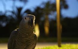 کاسکو طوطی خاکستری خواب شب روز صبح ظهر عصر