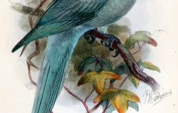 Newton's Parakeet