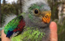 hand feeding parrot