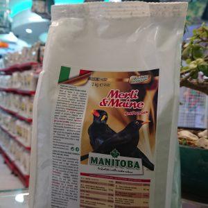 Manitoba Myna Patee 4257 Birdfood Mina Insecta Blackbird